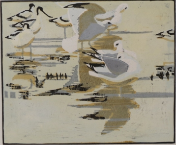 Common Gulls and Avocets