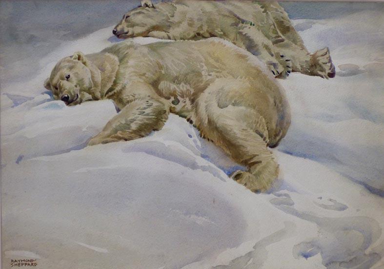 Polar Bears - London Zoo